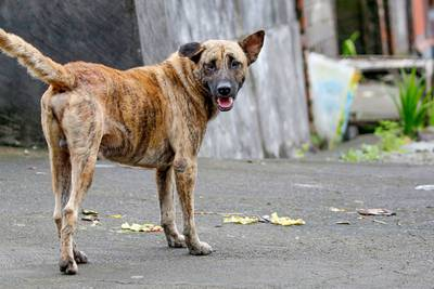 Who let the dogs out? Strays take over streets in Florida town