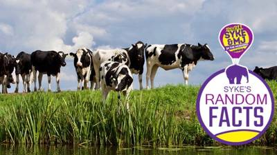 Random Facts: 40% Of A Cow Is Used To Make What?